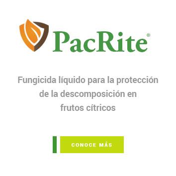 PacRite